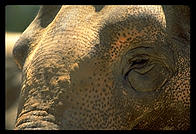 Elephant closeup.